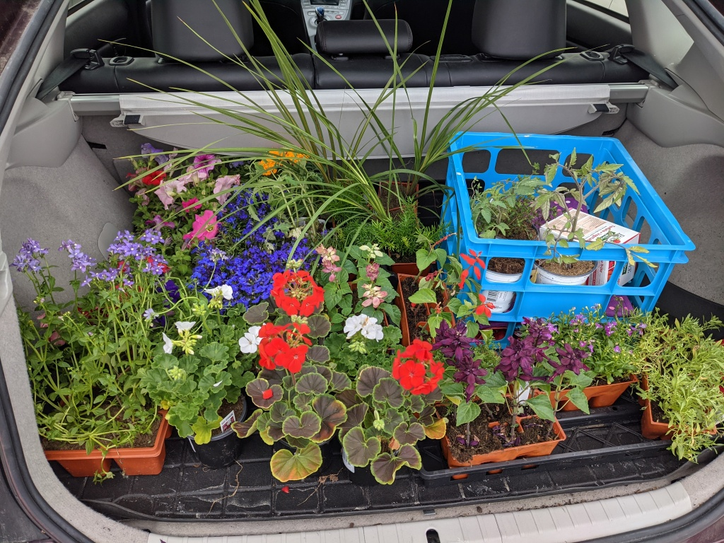trunk filled with annual nursery plants
